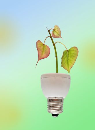 Tree growing from base of fluorescent lamp photo