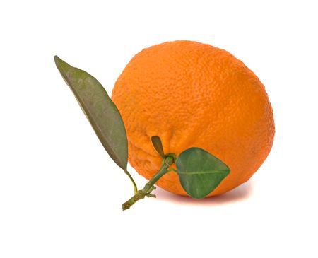 Tangerine on branch Stock Photo - 6641229