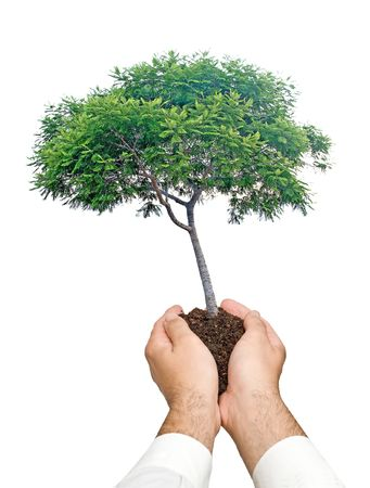 Tree in hands as a symbol of nature potection Stock Photo - 6641163