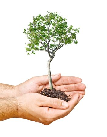 Tree in hands as a symbol of nature potection Stock Photo - 6641214