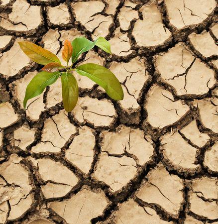 barren: Avocado seedling growing from barren land