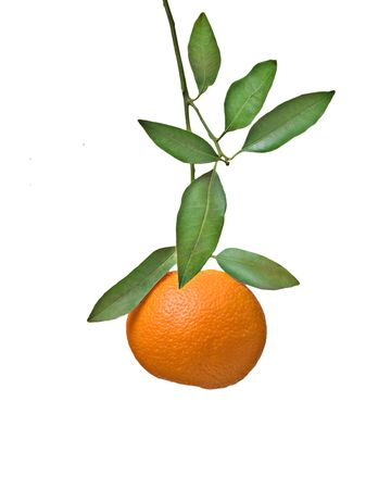 Tangerine on branch Stock Photo - 6641308