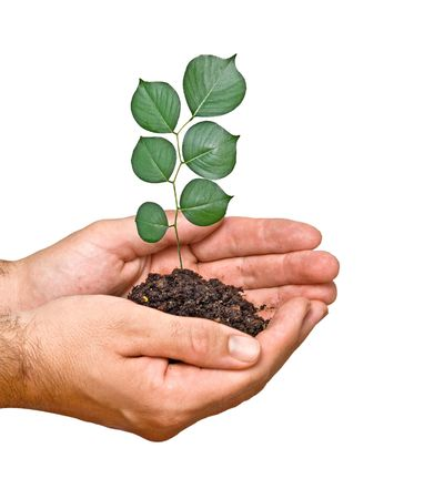tree seedling in hands as a symbol of nature protection Stock Photo - 6709993