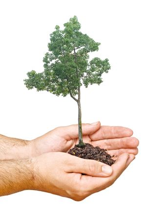 tree  in hands as a symbol of nature protection Stock Photo - 6709937
