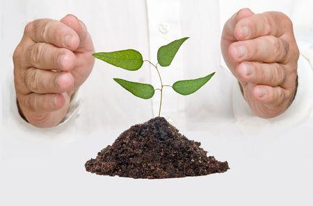 emergent: hands protecting tree seedling  Stock Photo