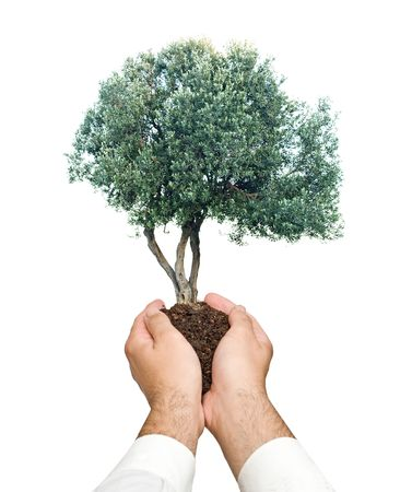 tree  in hands as a symbol of nature protection photo