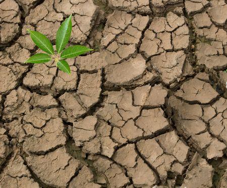 nieużytki:  rozsadów upraw z gruntów barren  Zdjęcie Seryjne