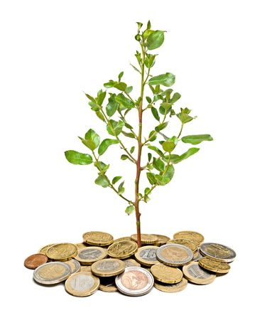 Tree growing from pile of coins photo