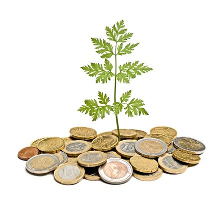 parsley growing from pile of coins Stock Photo - 6819421