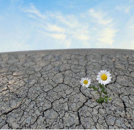 nieużytki: Rumianek uprawy na gruntach barren