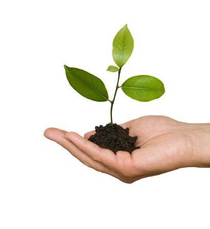 tree seedling in hand as a symbol of nature protection photo