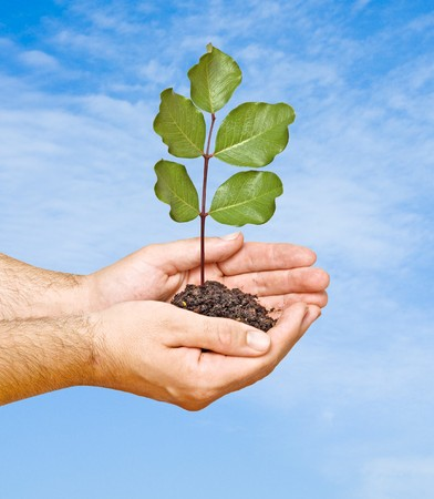 emergent: tree seedling in hands as a symbol of nature protection