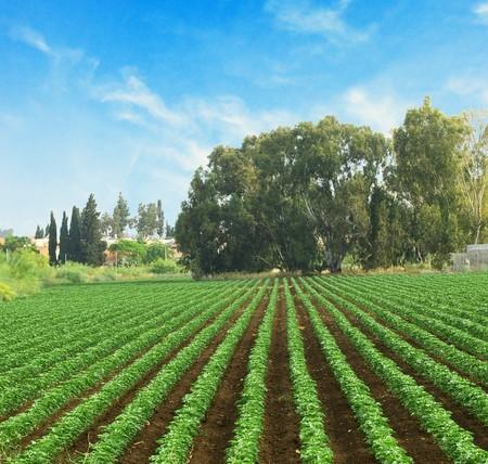 Field at Israel Stock Photo - 7009590