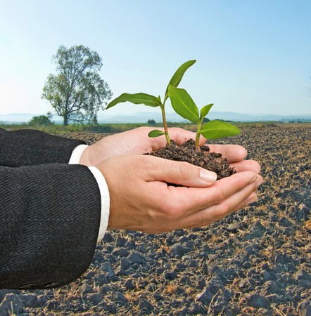 ecosavy: Seedlings in hand Stock Photo