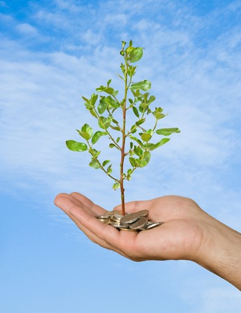 Palm with a tree growing from pile of coins Stock Photo - 7094263