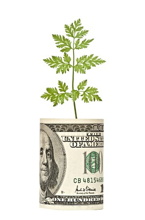 Parsley growing from dollar Stock Photo - 7250134