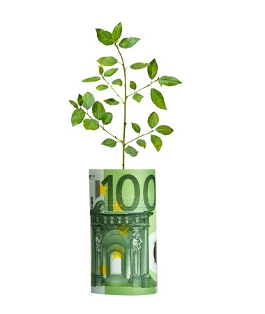 tree vertical: Tree growing from euro bill