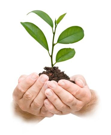 sembrando un arbol: Palmas con un plantón de árbol