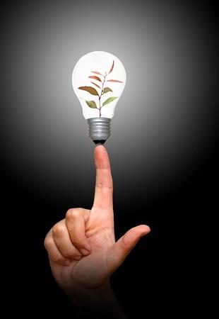 effizient: Baum S�mling in Lampe