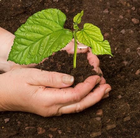 plantando un arbol: Plantar un �rbol