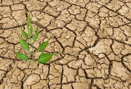 barren: Barren land at summer