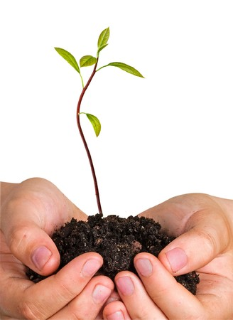avocado tree seedling in hands as a symbol of nature protection photo