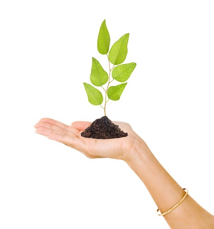 sprout in palm as a symbol of nature protection Stock Photo - 7480365