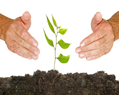 ecological problem: Tree protected by hands Stock Photo