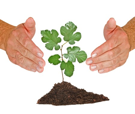 protected tree: Tree seedling protected by hands Stock Photo