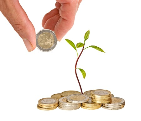 avocado seedling growing from pile of coins photo