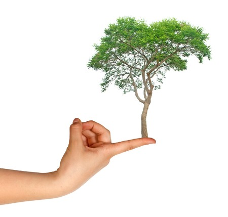 Tree on finger as a symbol of nature protection photo