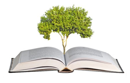 Tree seedling growing from book photo