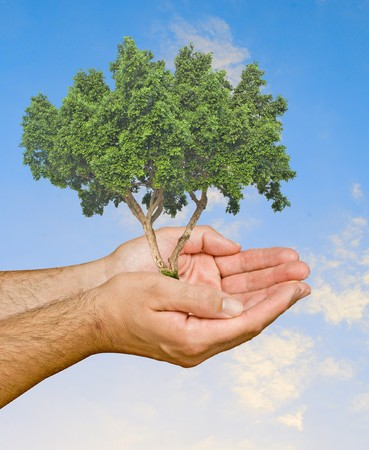 ecological problem: tree in hands as a symbol of nature protection