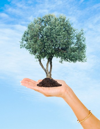 ecological problem: Olive tree  in hands as a symbol of nature protection