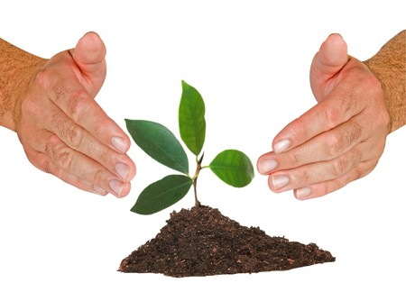 protected tree: Tree protected by hands Stock Photo