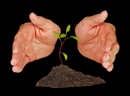 ecological problem: Avocado seedling protected by hands
