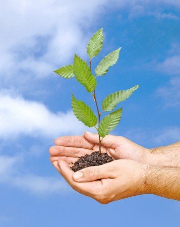 tree seedling in hands as a symbol of nature protection photo