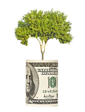 pot of money: tree  growing from dollar bill Stock Photo