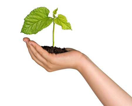 ecosavy: A sprout in hand as a symbol of nature protection