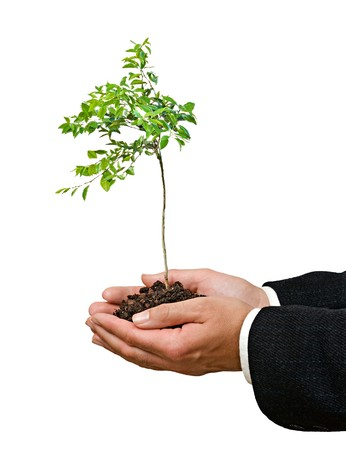 Young orange tree in hands photo