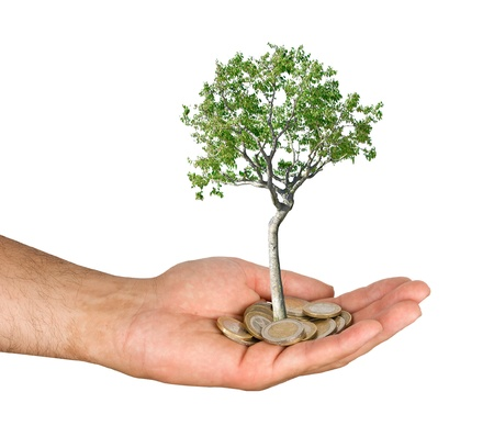 Palm with a tree growng from pile of coins photo