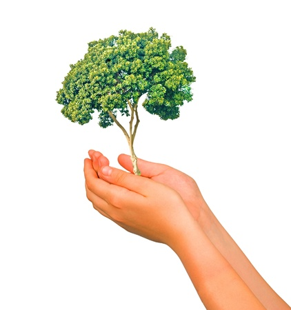 ecosavy: Tree in hands