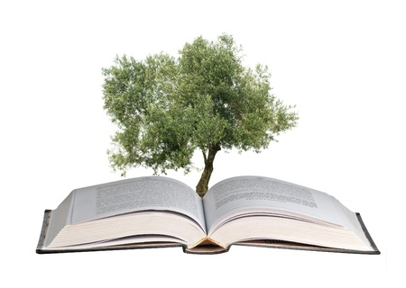 Olive tree growing from book photo