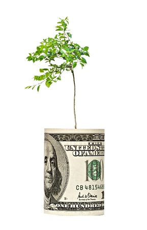 dolar: Naranjo joven que crece desde el proyecto de ley dolar