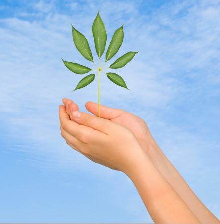 sapling in hands Stock Photo - 21166313