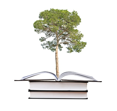 pine tree growing from book photo