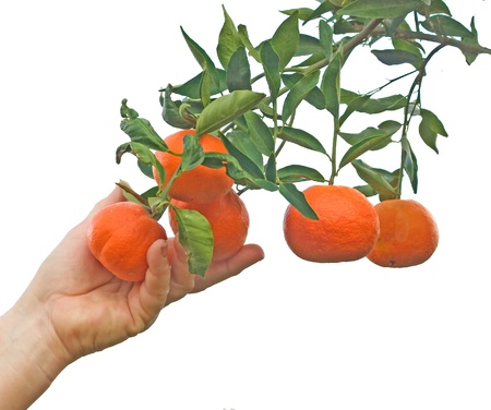 Tangerine branch photo