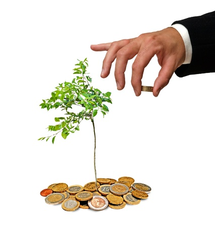 Young orange tree growing from coins photo