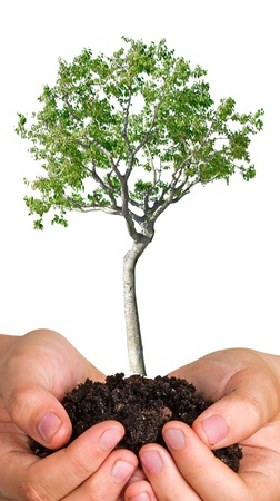 Tree in hands as a symbol of nature potection photo