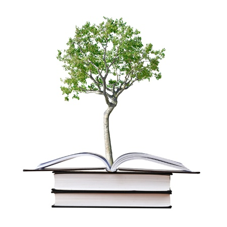 Birch tree growing from book Stock Photo - 8624147
